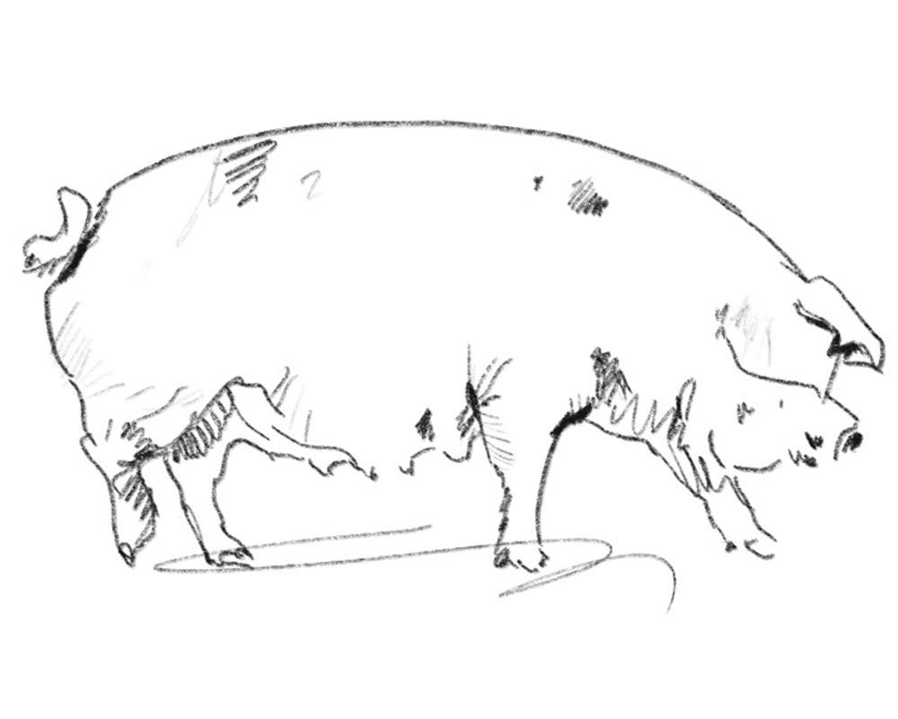 Gralhof Illu Bio Und Nachhaltigkeit Schwein