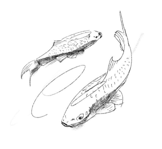 Fischi1